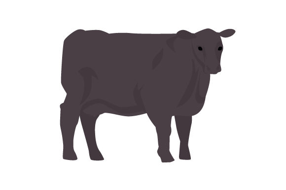 Download Free Angus Cow Svg Cut File By Creative Fabrica Crafts Creative Fabrica for Cricut Explore, Silhouette and other cutting machines.