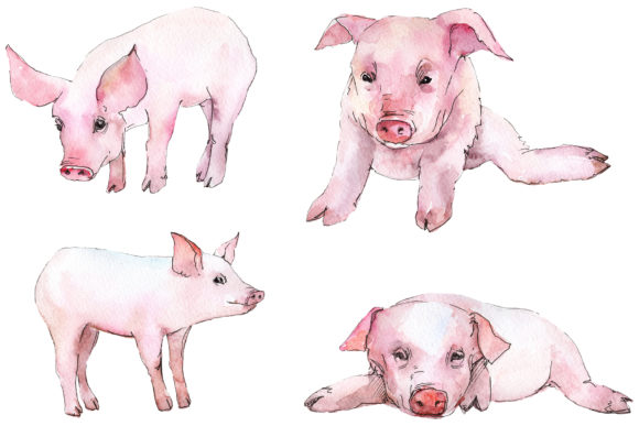 Print on Demand: Animal Pig Watercolor Graphic Illustrations By MyStocks