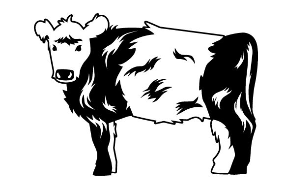 Download Free Belted Galloway Cow Svg Cut File By Creative Fabrica Crafts for Cricut Explore, Silhouette and other cutting machines.