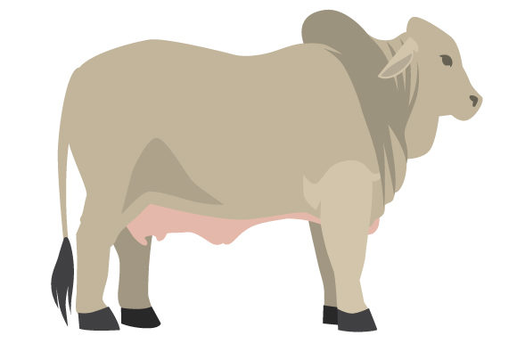 Download Free Brahman Cow Svg Cut File By Creative Fabrica Crafts Creative for Cricut Explore, Silhouette and other cutting machines.