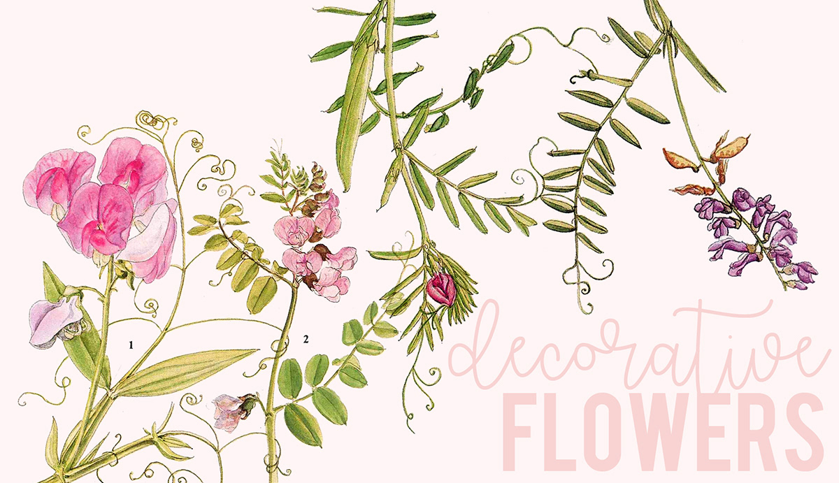 Download Free Decorative Flowers Set Graphic By Lunarctic Creative Fabrica for Cricut Explore, Silhouette and other cutting machines.