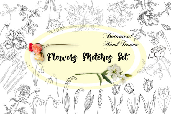 Print on Demand: Flowers Sketches Set. Digital Clipart Graphic Illustrations By natalia.piacheva