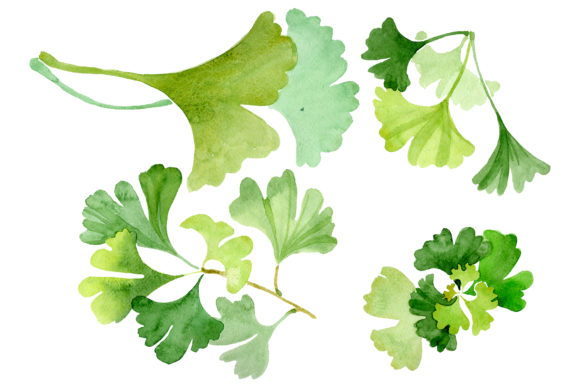 Print on Demand: Ginkgo Biloba Plain Green Watercolor  Graphic Illustrations By MyStocks