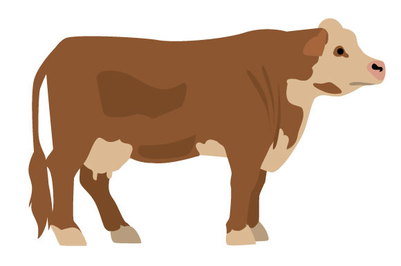 Download Free Hereford Cow Svg Cut File By Creative Fabrica Crafts Creative for Cricut Explore, Silhouette and other cutting machines.