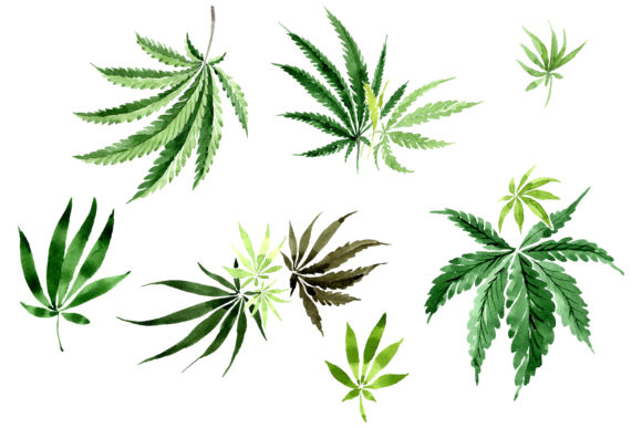 Download Free Leaves Hemp Plant Watercolor Png Graphic By Mystocks Creative for Cricut Explore, Silhouette and other cutting machines.