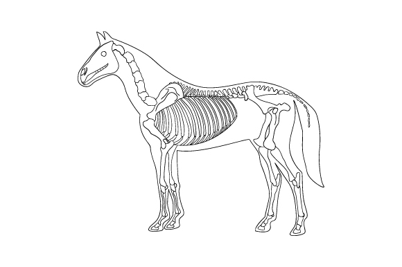 Download Free Line Art Of Horse Skeleton Inside Silhouette Of Body Svg Cut File for Cricut Explore, Silhouette and other cutting machines.