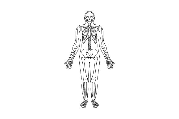 Download Free Line Art Of Human Skeleton Inside Silhouette Of Body Svg Cut File for Cricut Explore, Silhouette and other cutting machines.