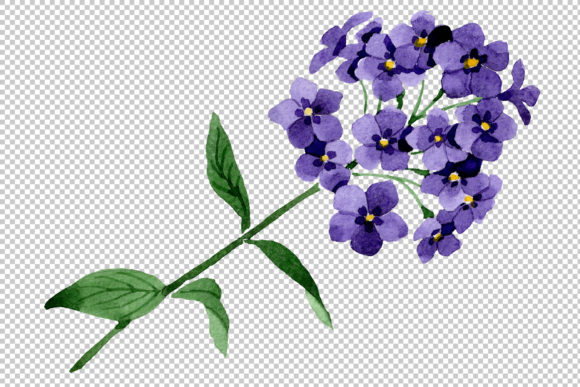 Print on Demand: Phlox Blue Watercolor Png Graphic Illustrations By MyStocks