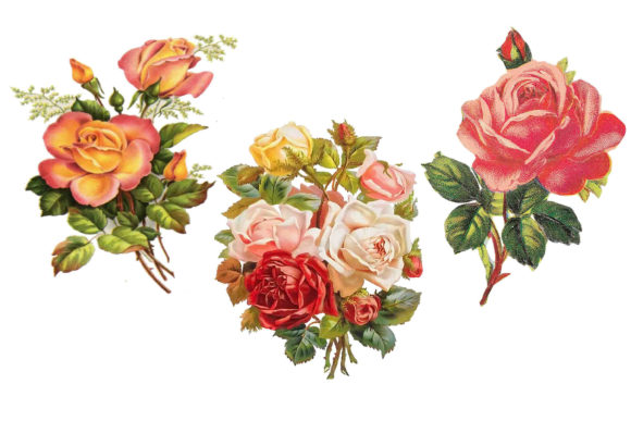Print on Demand: Roses Clip Art Graphic Illustrations By retrowalldecor - Image 2