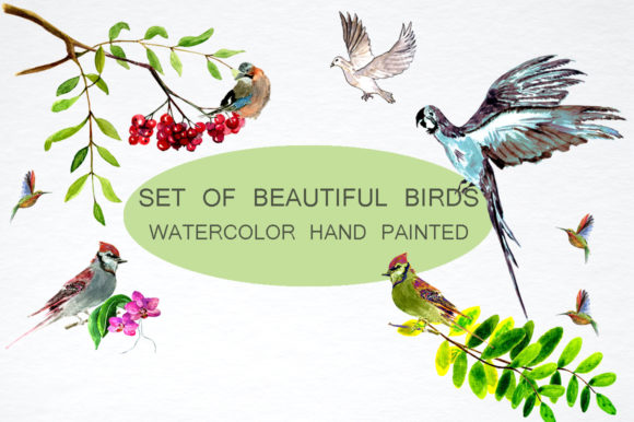 Set of Beautiful Birds Graphic By kakva