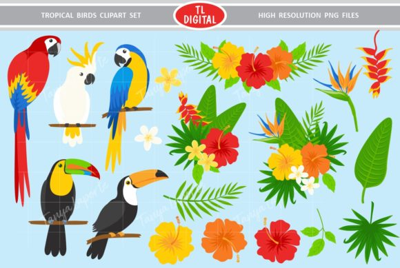 Birds tropical. And flowers clipart set