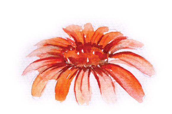 Download Free Watercolor Orange Daisy Svg Cut File By Creative Fabrica Crafts for Cricut Explore, Silhouette and other cutting machines.