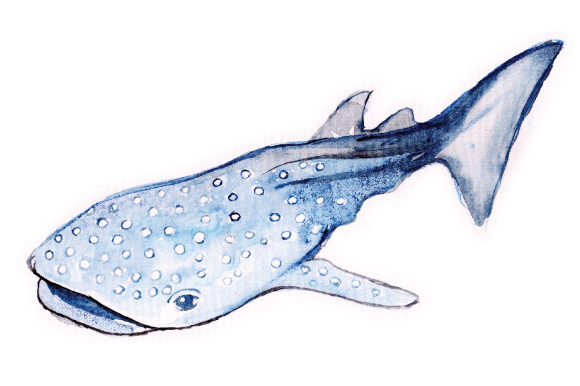 Watercolor Whale Shark Animals Craft Cut File By Creative Fabrica Crafts - Image 1