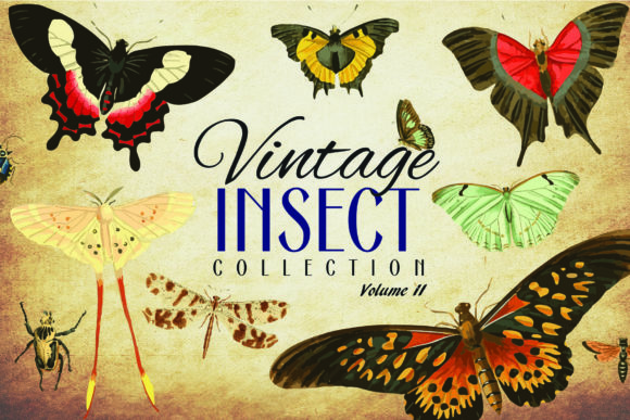 110 Vintage Insect Vector Graphics 2 Graphic By denestudios