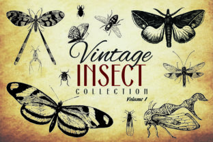 200 Vintage Insect Vector Graphics Graphic By denestudios