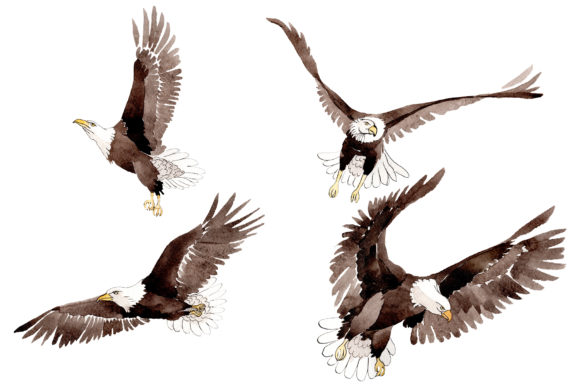 Print on Demand: American Bald Eagle Watercolor Graphic Illustrations By MyStocks