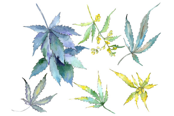 Print on Demand: Cannabis Watercolor Png Graphic Illustrations By MyStocks