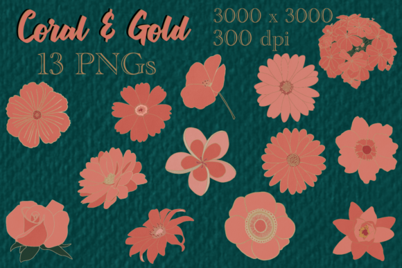 Print on Demand: Coral and Gold Flower Pack Graphic Illustrations By BellaBoo