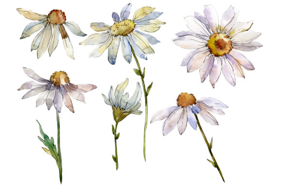 Download Free Daisy White Watercolor Graphic By Mystocks Creative Fabrica for Cricut Explore, Silhouette and other cutting machines.