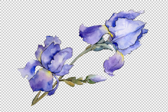 Print on Demand: Eurobuket Irises Blue Watercolor Png Graphic Illustrations By MyStocks - Image 2