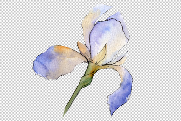 Print on Demand: Eurobuket Irises Blue Watercolor Png Graphic Illustrations By MyStocks - Image 4