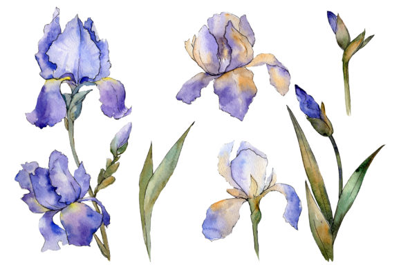 Print on Demand: Eurobuket Irises Blue Watercolor Png Graphic Illustrations By MyStocks - Image 1