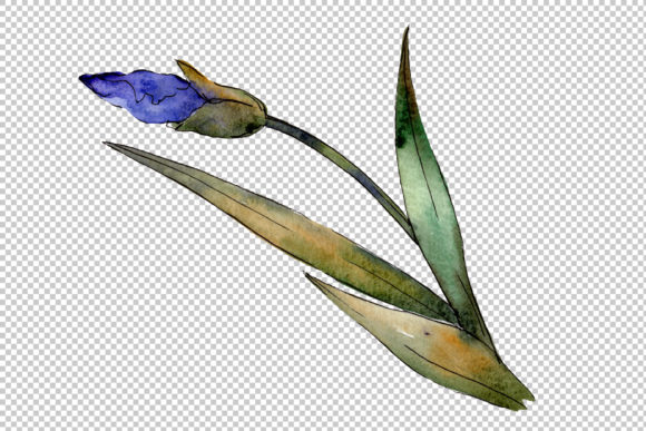 Print on Demand: Eurobuket Irises Blue Watercolor Png Graphic Illustrations By MyStocks - Image 7