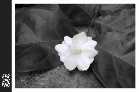 Print on Demand: Flower Photography Graphic Nature By Arief Sapta Adjie II - Image 1