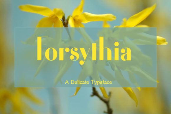 Print on Demand: Forsythia Display Font By layerdrops6