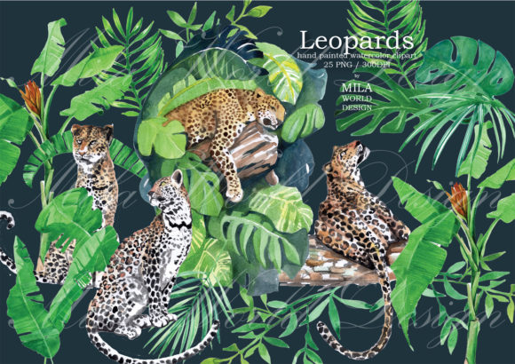 Leopards Watercolor Clip Art Graphic Illustrations By MilaWorldDesing