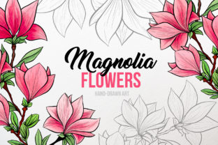 Magnolia Flowers Hand-drawn Art Graphic Illustrations By ilonitta.r