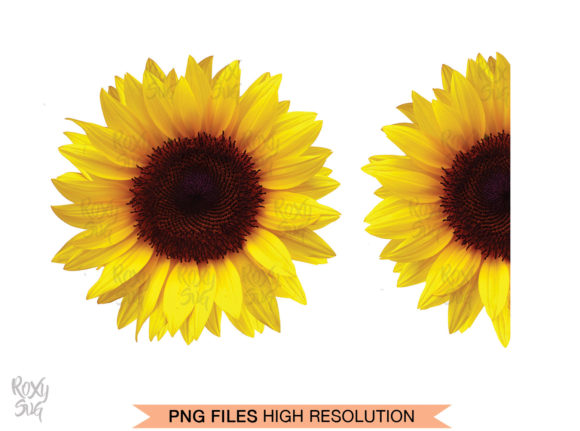 Sunflower Clipart Graphic Nature By roxysvg26