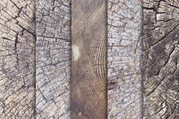 Tree Trunk Stump Textures X10 Graphic Textures By SmartDesigns - Image 2
