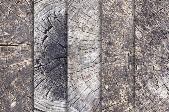 Tree Trunk Stump Textures X10 Graphic Textures By SmartDesigns - Image 3