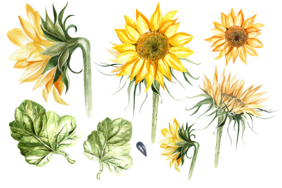 Watercolor Sunflower & Pumpkins Graphic Objects By Knopazyzy - Image 2