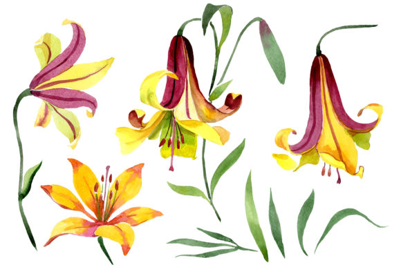 Print on Demand: Yellow Lily Flower Watercolor Png Graphic Illustrations By MyStocks