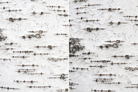 12 Birch Bark Background Textures Graphic Logos By Textures - Image 3