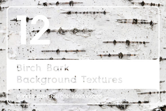 12 Birch Bark Background Textures Graphic Logos By Textures