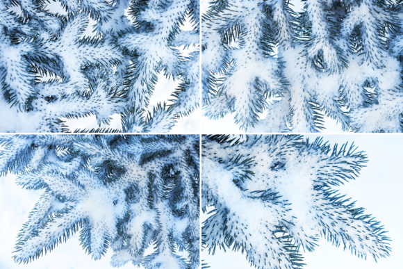 13 Blue Tree Background Textures Graphic Logos By Textures - Image 2