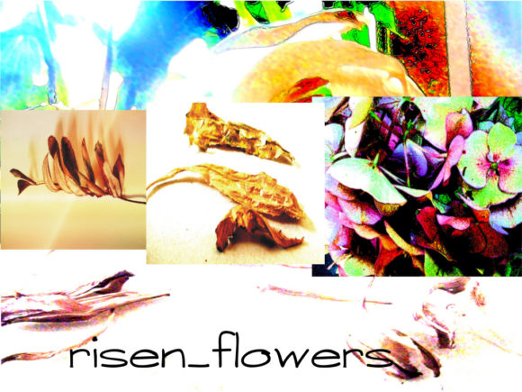 A Risen Flower Graphic Illustrations By f4mmedia