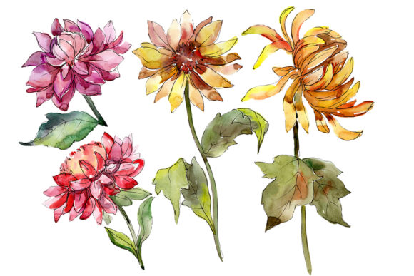 Print on Demand: Bouquet of Asters and Daisies Watercolor Graphic Illustrations By MyStocks