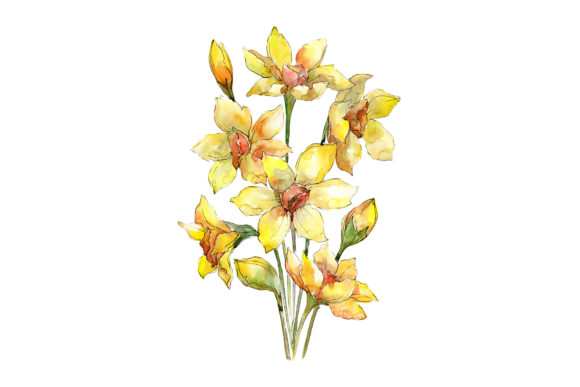 Print on Demand: Bouquet of Narcissus Yellow Flower Graphic Illustrations By MyStocks