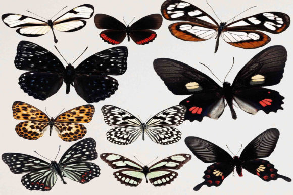 Print on Demand: Butterfly Clipart Graphic Illustrations By retrowalldecor - Image 1