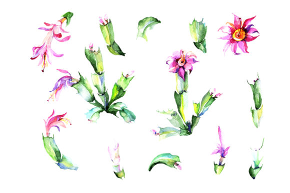 Print on Demand: Cacti Flower Green and Pink Watercolor Graphic Illustrations By MyStocks