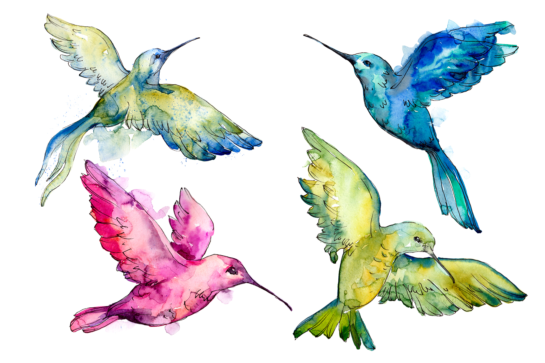 Download Free Colibri Small Bird Watercolor Graphic By Mystocks Creative Fabrica for Cricut Explore, Silhouette and other cutting machines.