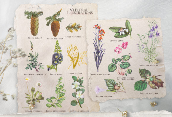 Download Free Cornucopia Vintage Botanical Set Graphic By Kaleriiatv for Cricut Explore, Silhouette and other cutting machines.