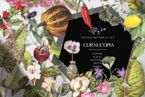 Print on Demand: Cornucopia Vintage Botanical Set Graphic Illustrations By kaleriiatv