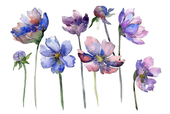 Download Free Cosmos Flower Blue Watercolor Graphic By Mystocks Creative Fabrica for Cricut Explore, Silhouette and other cutting machines.