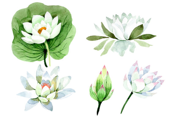 Download Free Flower White Lotus Watercolor Graphic By Mystocks Creative Fabrica for Cricut Explore, Silhouette and other cutting machines.