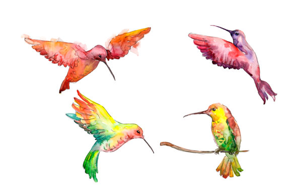 Print on Demand: Hummingbird Bird Family Watercolor Grafik Illustrationen von MyStocks